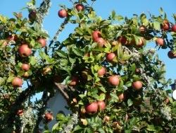 Photo paysage et monuments, Saint-Sulpice-Laurière - pommes de chez nous