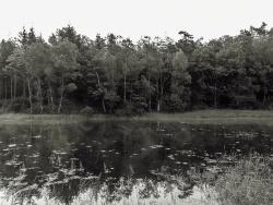 Photo paysage et monuments, Saint-Sylvestre - Etang de la Crouzille