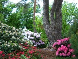 Photo faune et flore, Ban-de-Sapt - Fête des Rhododendron