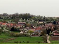 Photo paysage et monuments, Savigny - le printemps