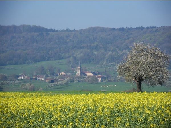 Que la campagne est belle au printemps !