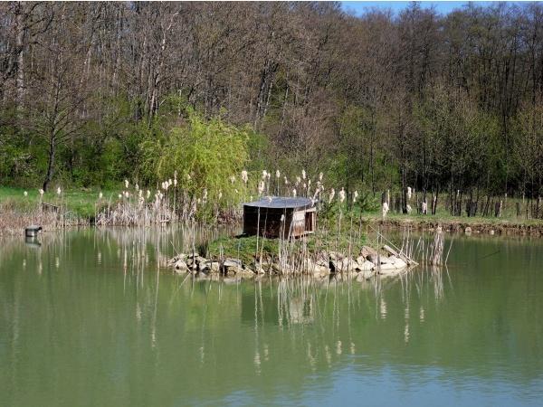 Un des nombreux étangs