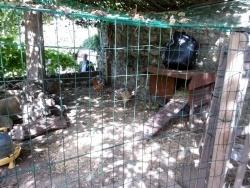 Passage obligé : la visite aux poules