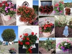 Les fleurs poussent aussi en Auvergne