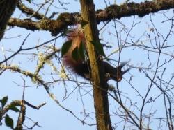 Photo faune et flore, Bussières - Écureuil roux sur les berges de la Romanée