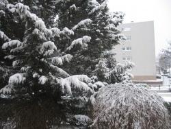 Photo paysage et monuments, Épinay-sous-Sénart - LE sapin sous un voile de neige