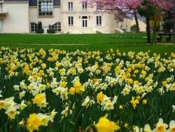 Photo faune et flore, Le Plessis-Bouchard - Premier jour de printemps dans le parc Yves Carric du Plessis-Bouchard