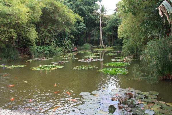 Le bassin du jardin botanique deshaies une photo de - Jardin botanique guadeloupe basse terre ...