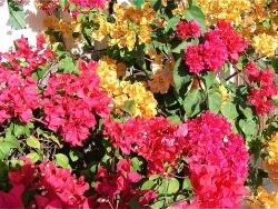 Photo faune et flore, Saint-Paul - Mi aime a ou île de la Réunion